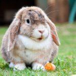 groente, konijn, ogen