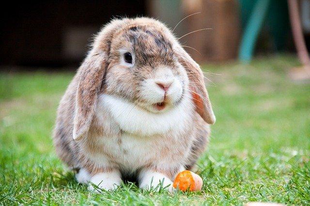 Heb je ooit wel eens een konijn met een bril gezien?