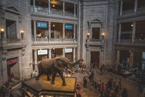 olifant, huidhonger, aanraken
